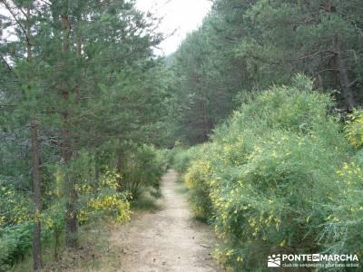 Valle del Lozoya - Camino de la Angostura;rutas desde cercedilla excursiones madrid y alrededores
